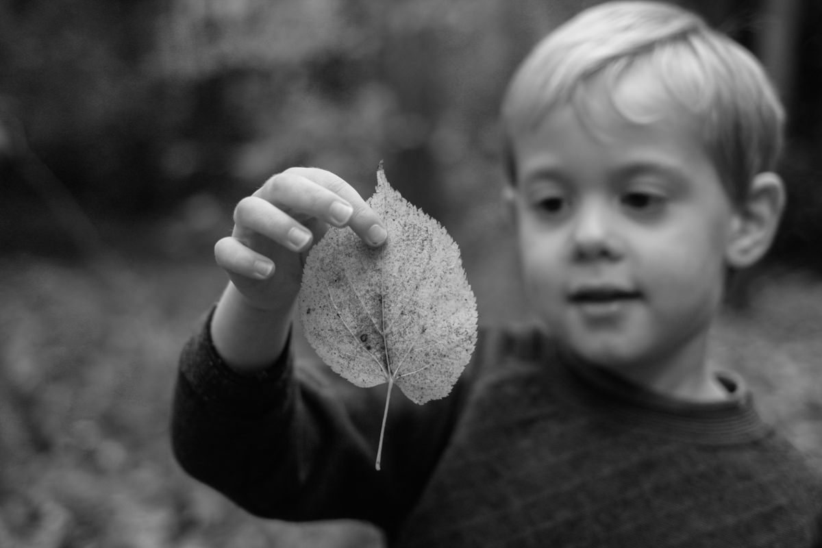 Boy looking at leave in autumnal woodland black and white